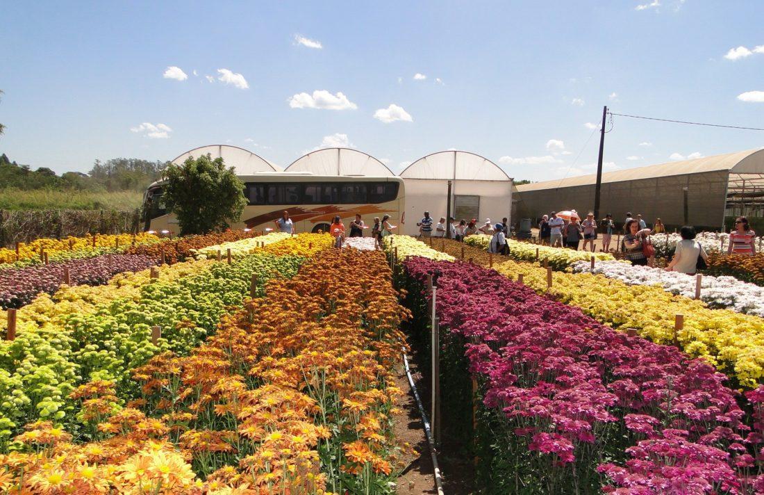 Campos de flores/ Passeio Turístico Foto divulgação: Fabiano de Bruin