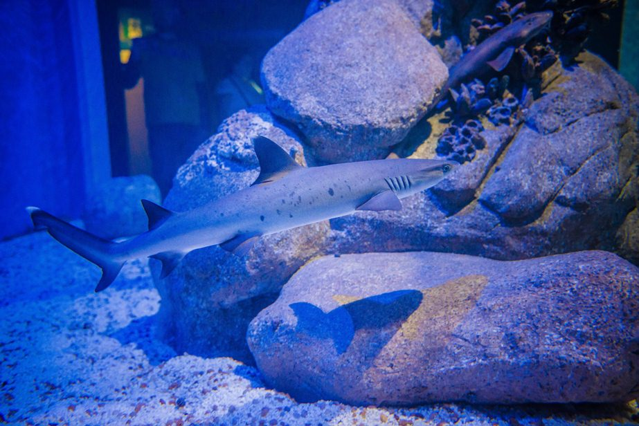 Foto: simone-mascarenhas