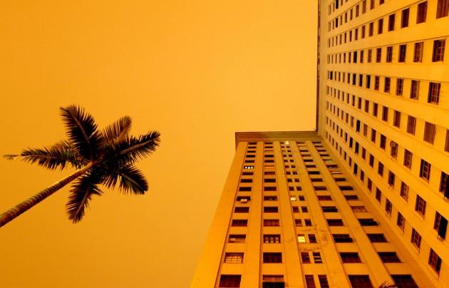 Foto paisagem do prédio e coqueiro.