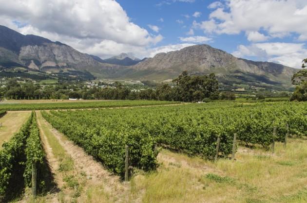 Winery Franschhoek