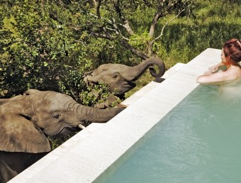 Elephant (Loxodonta africana). Woman enjoying a swim while two elephants drink water out of the private plunge pool of one of the luxury suites at Royal Malewane Private Game Lodge. Situated in the world famous Sabi Sand Game Reserve, bordering the Kruger National Park. South Africa. Dist. Sub-Saharan Africa. Model Released
