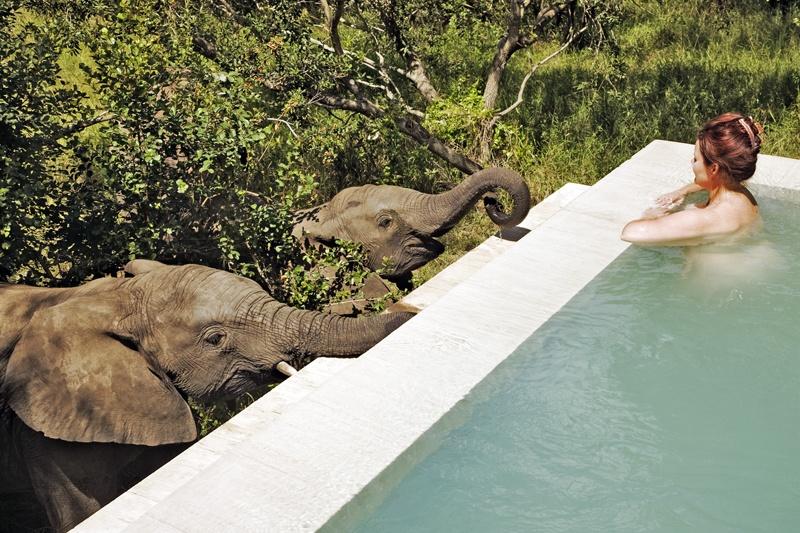 Os Melhores Safaris na África do Sul – Parte 1
