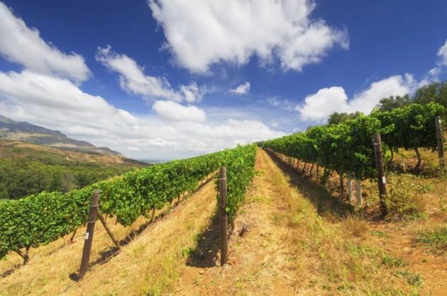 Stellenbosch,  wine growing region in South Africa