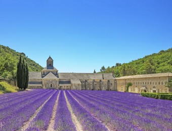 Abbey of Senanque blooming lavender flowers. Gordes, Luberon, Provence, France.
