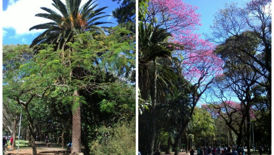 Parque Ibirapuera – Feriado em SP